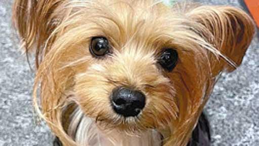 #暑さを乗り切る(下)激しい呼吸、大量のよだれがサイン…犬の熱中症にも注意