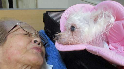 愛犬との再会、取り戻した生活…ダイヤモンドより輝いた1年半