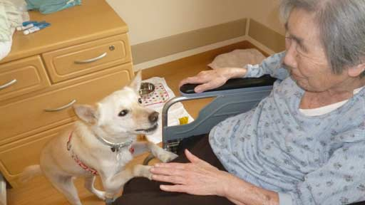 認知症の女性を癒やした犬(上)奇跡の嵐を呼ぶ犬「アラシ」との出会い