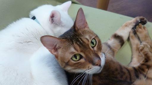 入居者に勇気を与えてくれる猫たち…障害を持つカッチャンとタイガ、生きる力の象徴に
