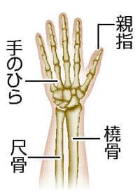 「手首 骨」の画像検索結果
